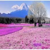 Hokkaido (0)