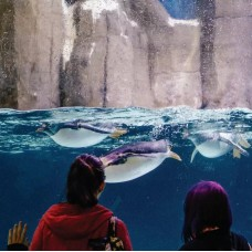 Sea Life Melbourne Aquarium Entry Ticket (Bar Code Direct Entry) by TapMyTrip