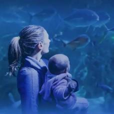 Sea Life Sydney Aquarium Entry Ticket (Bar Code Direct Entry) by TapMyTrip