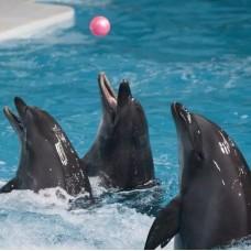 Dubai Dolphinarium by TapMyTrip