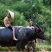 Basket Boat & Buffalo Ride Adventure by TapMyTrip