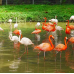 Zoo Negara (National Zoo of Malaysia) by TapMyTrip