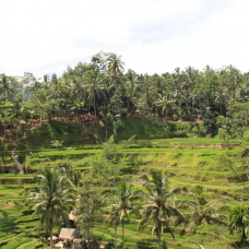 Central Bali Full Day Tour: Tegalalang Rice Field, Sacred Monkey Forest, Elephant Cave by TapMyTrip