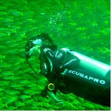 Tunku Abdul Rahman Park Scuba Diving Adventure by TapMyTrip