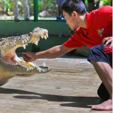 Crocodile Adventureland Langkawi Admission Ticket by TapMyTrip
