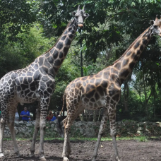 Melaka Zoo Night Safari Admission Ticket by TapMyTrip