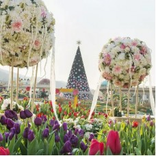 Everland Full Day Trip by KTOURSTORY by TapMyTrip