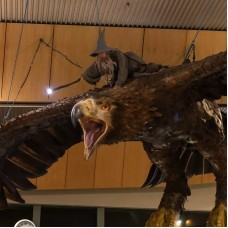 Weta Studio Tour: An Evening With Weta and CoCo by TapMyTrip
