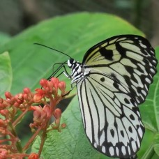 Butterfly Park & Insect Kingdom by TapMyTrip