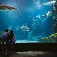 SEA LIFE Bangkok Ocean World by TapMyTrip