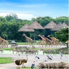 Shared Safari World Transfers by TapMyTrip