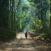 Coorg (3)