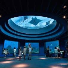 Universal Studios Singapore™ and Skyline Luge/S.E.A. Aquarium + Adventure Cove Waterpark/SIM Card Combo Packages by TapMyTrip